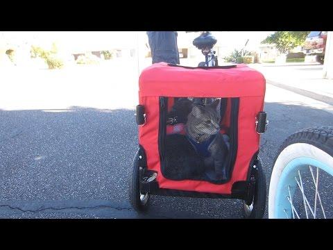 Cats in a Bike Trailer