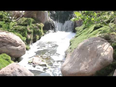 Japanese garden & Descanso garden Lugares para visitar en Los Angeles Ca.