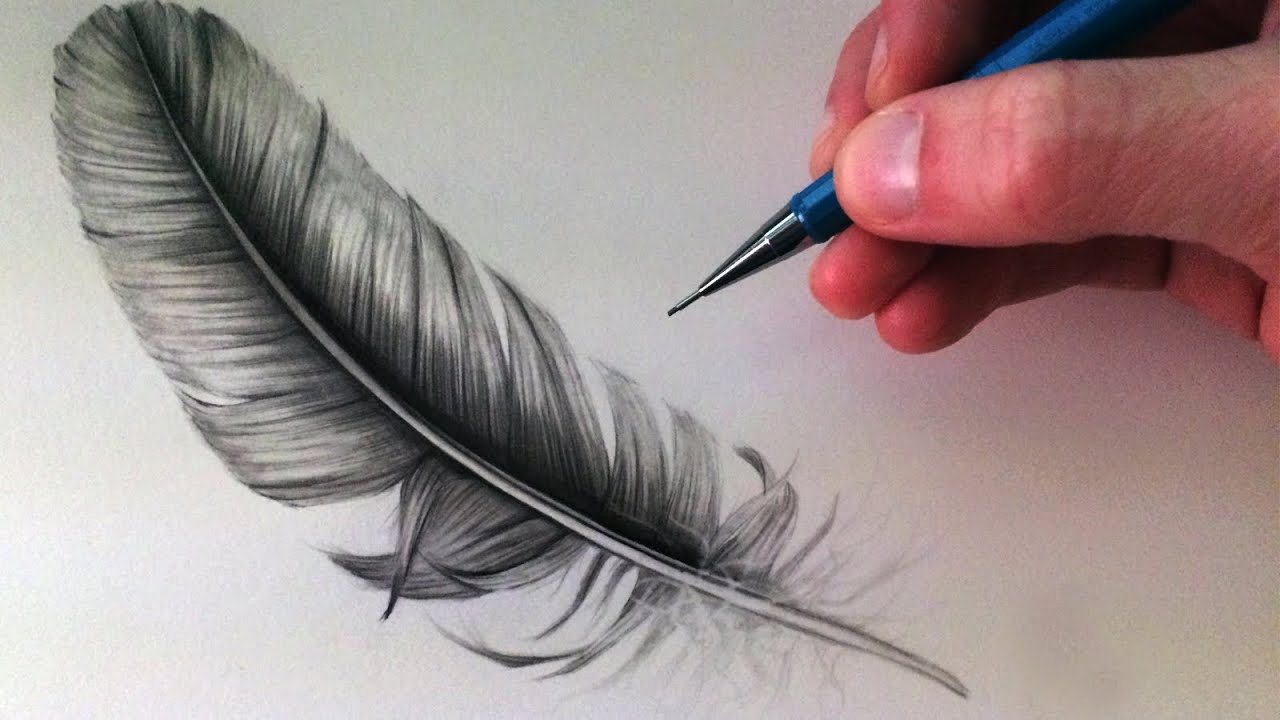Line Drawing Feather : How to draw a feather youtube