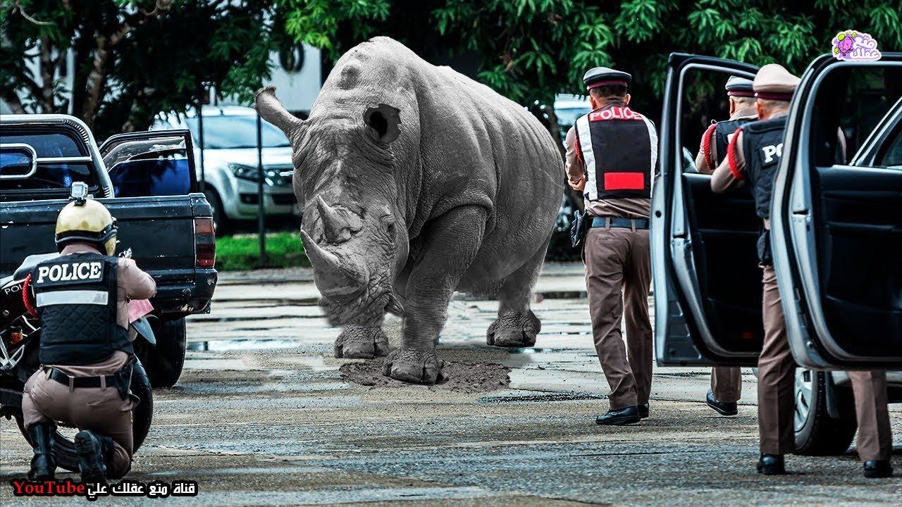 أذكي عمليات هروب لحيوانات من حديقة الحيوانات !