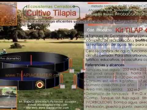 M dulos de cultivo tilapia con recirculacion de agua en for Construccion de estanques circulares para tilapia