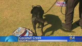 Coconut Creek Police Department Has A New School Safety Dog