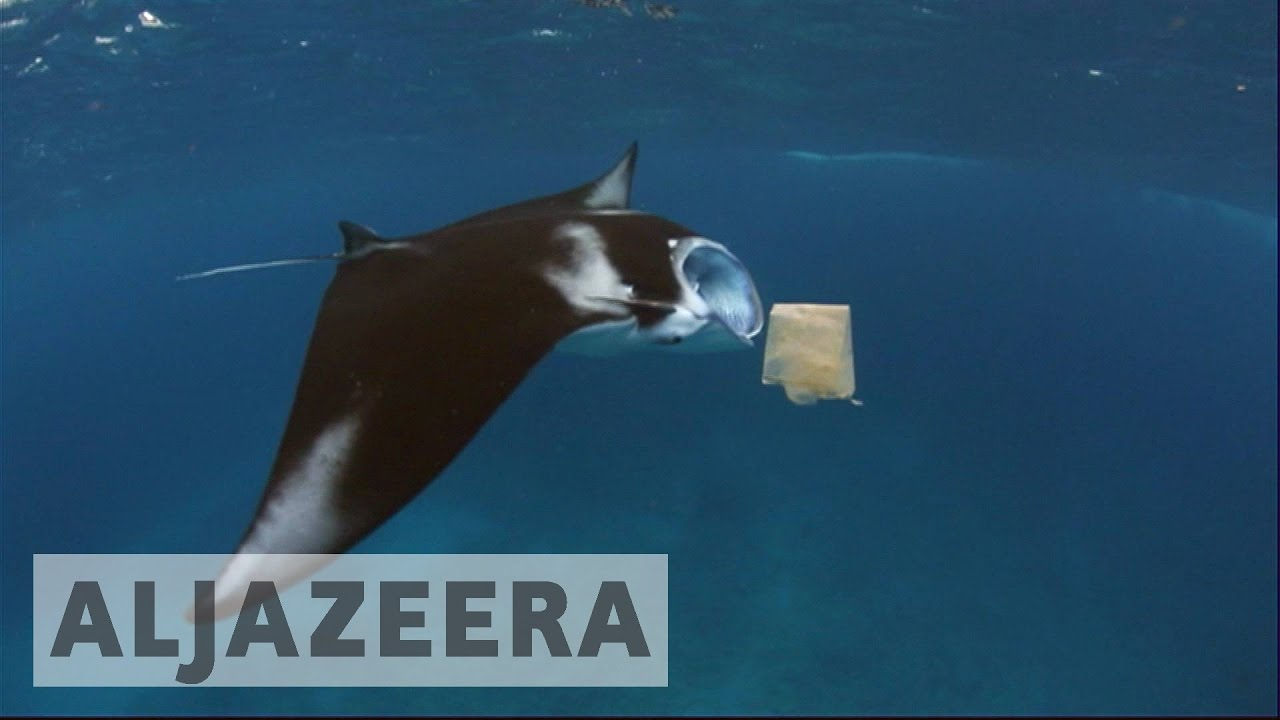Plan to reduce marine plastic waste launched in Indonesia