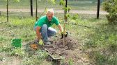 Купить саженцы яблонь в украине ✓ низкая цена на опт и розницу ✓ все сорта ➢ доставка почтой по украине ▻ садовый питомник садко ☎ (044).