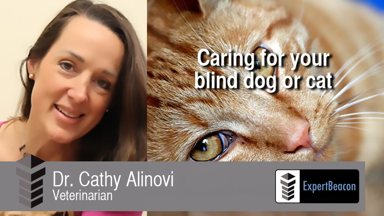 Caring for your blind dog or cat