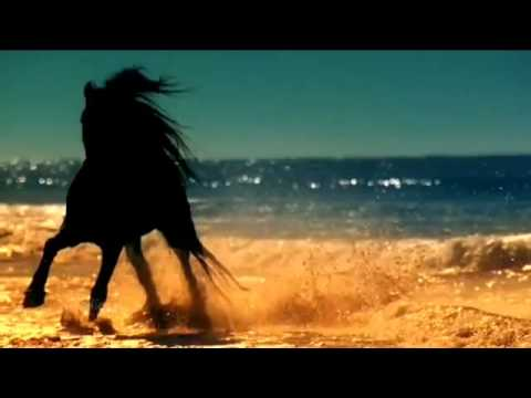 Клип девушка на коне
