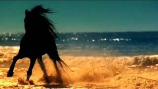 Небесная сказка о арабской девушке и коне.Красивая музыка(Пустыня,черный конь,всадница,красивая мелодия., 2013-10-24T13:46:02.000Z)