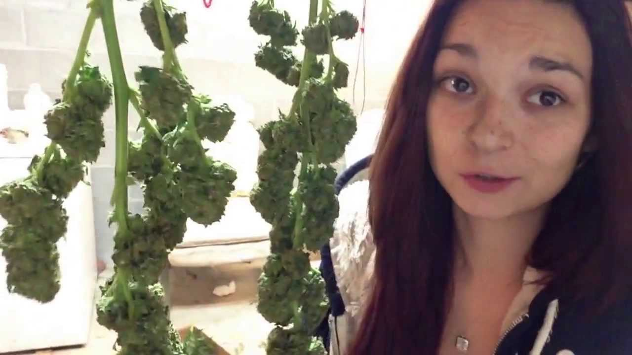 Trimming Weed Is A Full Time Job - YouTube