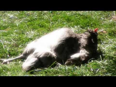 Blog un abreuvoir bien pratique 2 avi youtube for Abreuvoir lapin fait maison