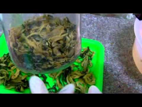 芥菜 (長年菜或掛菜)作法和結果 5(完).flv