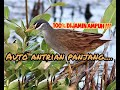 Suara Pikat Burung Tikusan Paling Ampuh  Mp3 - Mp4 Download