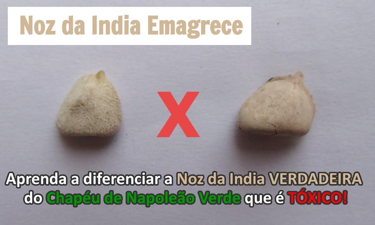 Aprenda a diferenciar a verdadeira Noz da Índia do Chapéu de Napoleão que é tóxico.