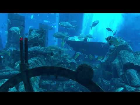 Dubai Aquarium  Atlantis & Dubai Mall Aquarium