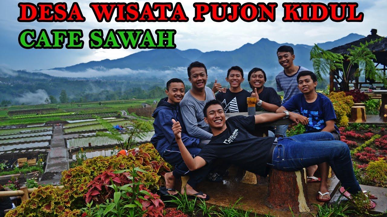 Desa Wisata Pujon Kidul Cafe Sawah Youtube