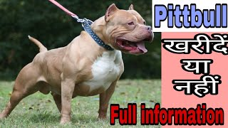 American Pittbull Dog Price buy or not /dog price list in India/ price list/expensive dog breeds