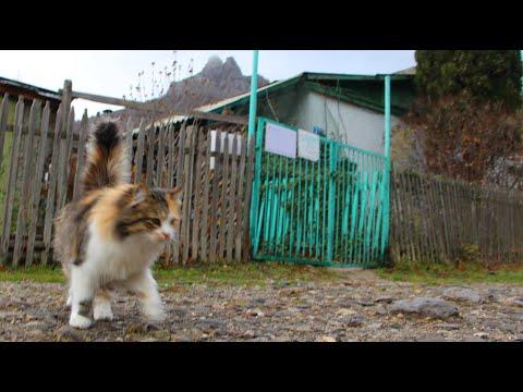Крымский репортаж. Sandro: Зеленогорье. Зимнее утро после дождя в горном селе