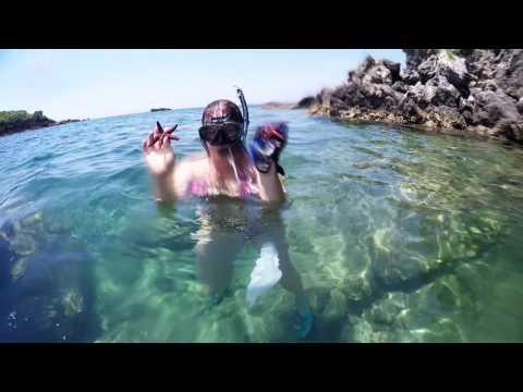 Diving: Starfish Kingdom