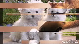 Картинки кошек и собак типо интро