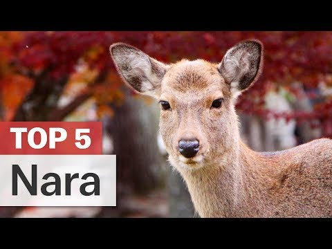 Top 5 Things To Do In Nara | Japan-guide.com