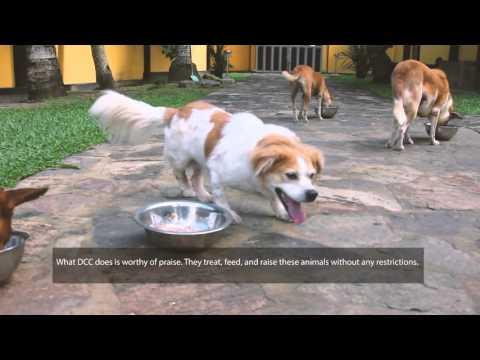 Dog Care Clinic - a Documentary by The Movement Sri Lanka