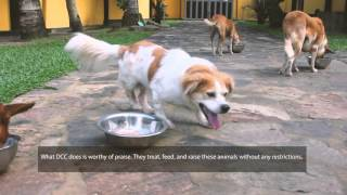 Dog Care Clinic - a Documentary by The Movement Sri Lanka