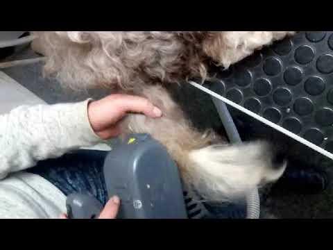 Auto Dog Brush ; Dematting a very matted tail