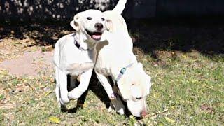 Mother Dog Surprises Her Runt Puppy!