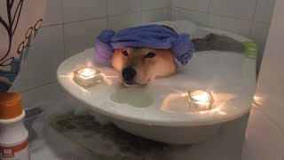 Stress Relief for Your Dog?