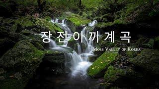 장전이끼계곡 출사기 Moss Valley of Korea / Behind Scene