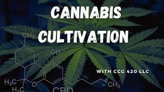 62 Cannabis Cultivation