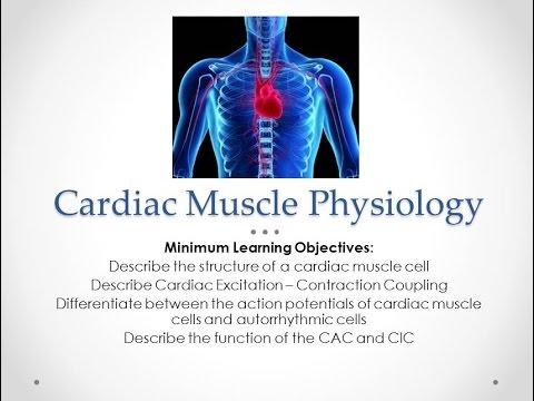 Cardiac Muscle Physiology - YouTube