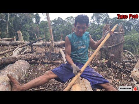 GOTONG ROYONG MENANAM PADI / MANUGAL DAYAK SIANG, MURUNG RAYA, Kalimantan Tengah
