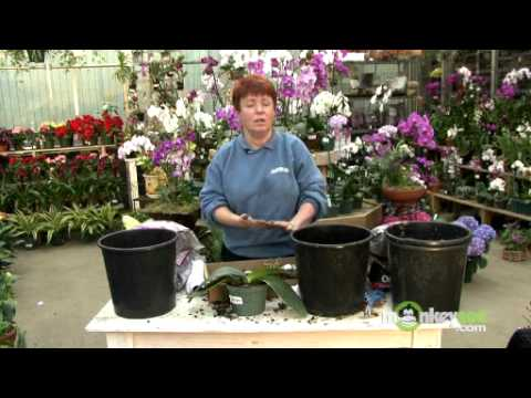 Repot an Orchid with Bark