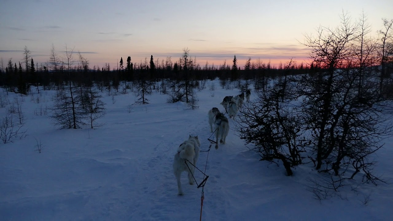 Inuit Sled Dogs - YouTube