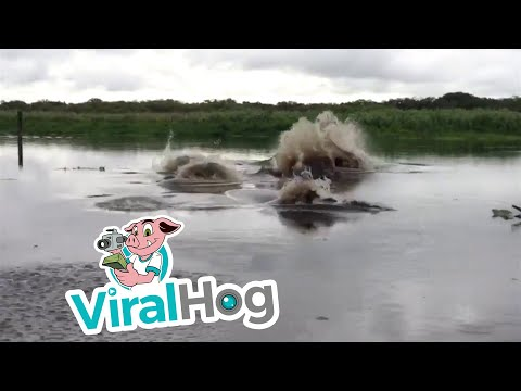 Would You Swim in This River? || ViralHog