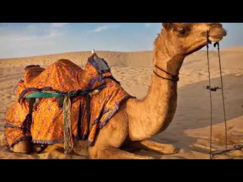 Al Madina Al Munawarah♥♥♥