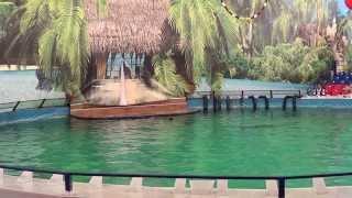 видео Дельфинарий на ВДНХ в Москве