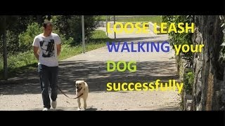 Train Me Please - Episode 12 - Loose Leash Walking Your Dog