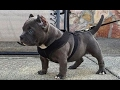 DOG BREED Top Best Cutiest Puppies - Just for Puppy Lovers [Mr Fahey]