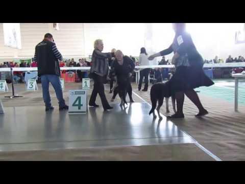 "Эверест Форт Аданте - Лучший бэби на ""Vip Dog 2017"""