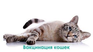 Вакцинация кошек.  Ветеринарная клиника Био-Вет.