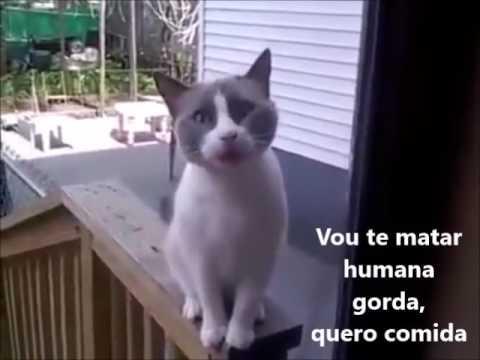 DO GATO REVOLTADO BAIXAR VIDEO