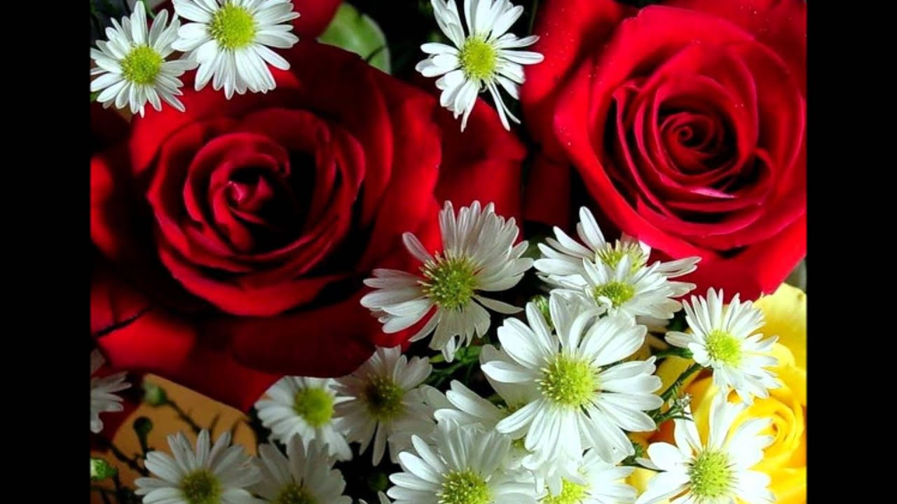 Луна луна цветы цветы