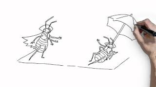 Whole home fumigation for bed bugs with Vikane® Gas Fumigant