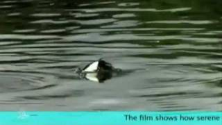 Beauty of Wetlands in Pakistan (Documentary: Available on request).mp4