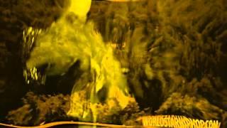 Fetty Wap - Decline Remix ( Chopped)