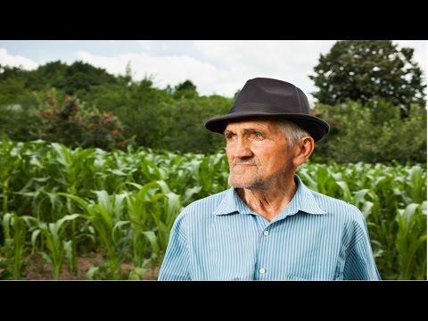 Curso Comercialização Agrícola - Informações Sobre o Mercado