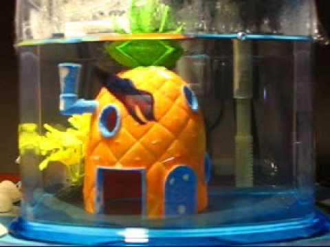 Billabong, my pet Betta fish - YouTube