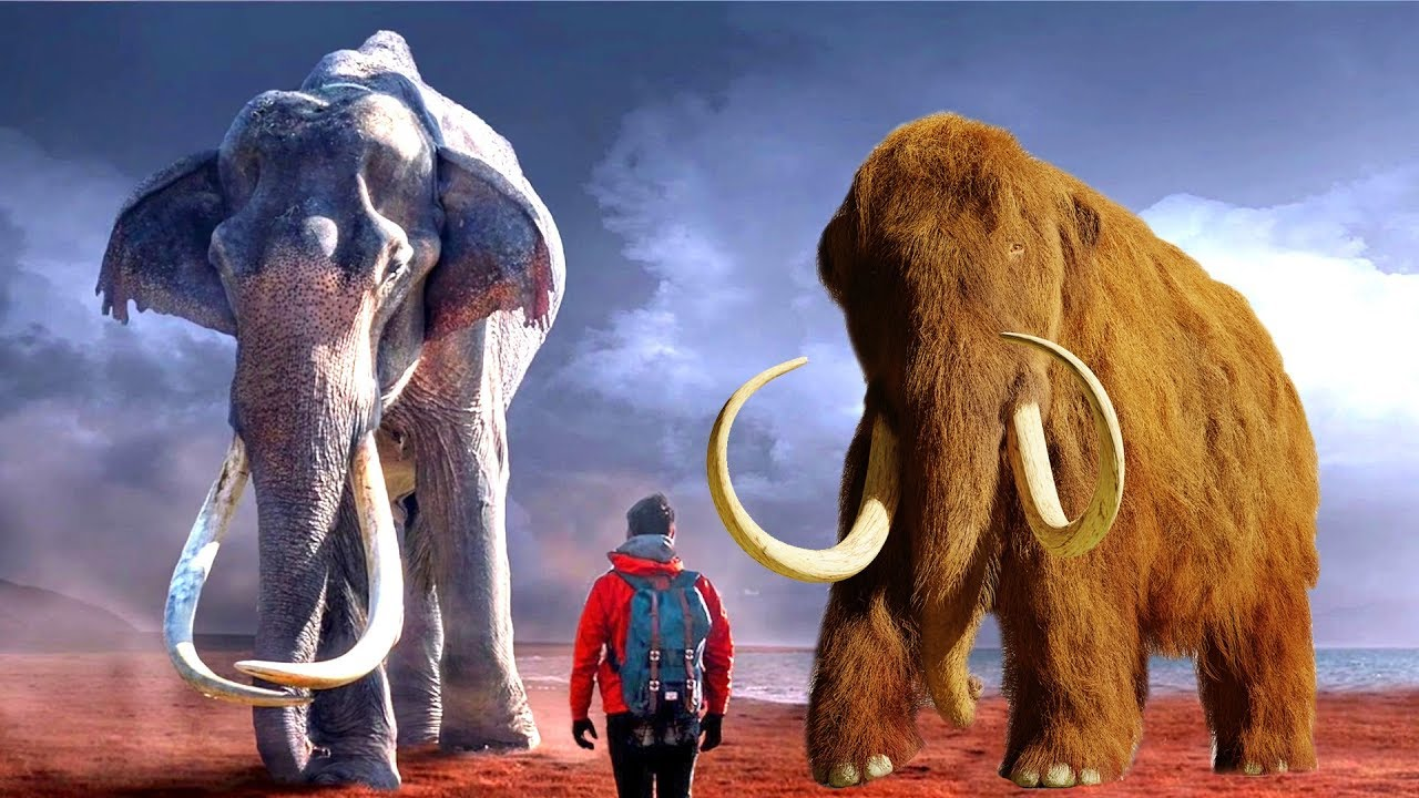 Scientist Are Bringing Back The Woolly Mammoth Into The ...