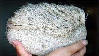 Mang 'cục đá mọc tóc trắng' kỳ lạ về nhà, người đàn ông giật mình khi phát hiện ra danh tính của nó